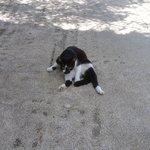 猫ちゃんが遊びにきていました