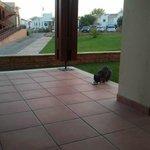 O visitante!!