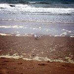 Чайка на пляже Довиля