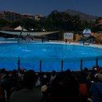 De dolfijnenshow
