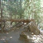 Добрый люди решили украсить это дерево своими пирамидками