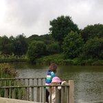watching the massive carp in the lake