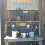 The potting table with fresh lavender bouquets of lavender await your visit - or pick-your own!