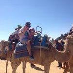 Ballade  chameau