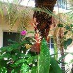 tropical gardens around pool/deck
