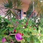 gardens around pool/deck