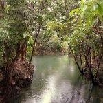원래는 너무나 투명한 강이나 이때 비가 많이와서 탁하다 / 악어가 살고있는 호수쪽과 연결되어 있는듯.