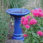 Birdbath in herb garden