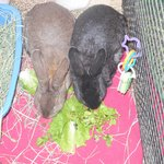 In the Bunny House - Snack Time