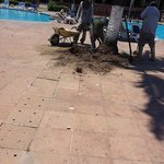 Removing Trees - Blocking Pool - Exposed Wires