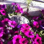 kaplumbağa:)
