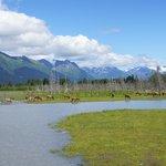 AK Wildlife Refuge