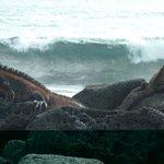 Olas e iguanas