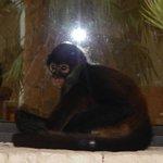JoJo the Secret's Monkey