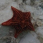 Starfish my wife spotted while snorkeling
