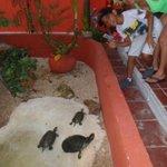 estanque de Tortugas
