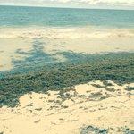 La playa con muchas algas por la temporada pero el agua riquísima y con poco oleaje