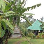 banana tree and dining room