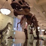 "A must see T-Rex, contributed by ""Mister Bones""."