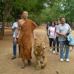 The Monks care for the Tigers...