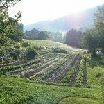 le champ cultivé par les proprios, avec la jument ardenaise