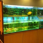 Display Fish Tank in Restaurant