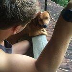 Hannah the dog!!!