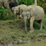 Just one of the hundreds of photos of the elephants we saw