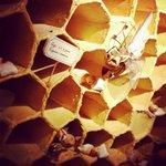 Le rôle des abeilles