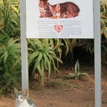 All cats on site are wormed and treated against fleas