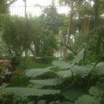 Intérieur d'une serre tropicale du Parc de la Tête d'Or, près de la Brasserie des Brotteaux