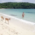 Deer just walked right by us on the beach one day!