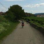 Cycling through Wachau vineyards