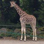 Baby giraffee��