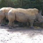 Die Nashörner im Zoo von Lille