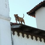Old PV`s way of guarding, put the dog on the roof, we asked locals and were told there`s water t