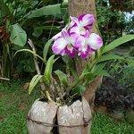 Orchidée-noix de coco :)