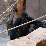 добрый обезьян