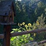 Bird House & Flowers-GL