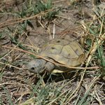 tortoise in the grounds