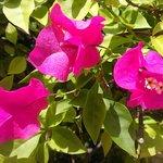 Stunning Flowers everywhere