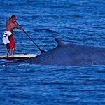 Paddle boarding in Los Muertos Bay