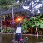 Alligator Feeding Area