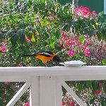 een schoteltje met suiker trekt mooie vogels aan