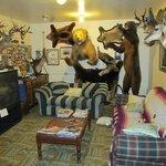 Antlers Inn Foto