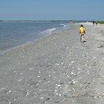 Hunting shells on Morris Island