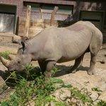 il rinoceronte al pasto