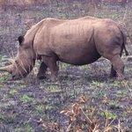White rhino, Hluhluwe.
