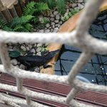 Crocodile at Tropical World