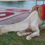Soirée marocaine
